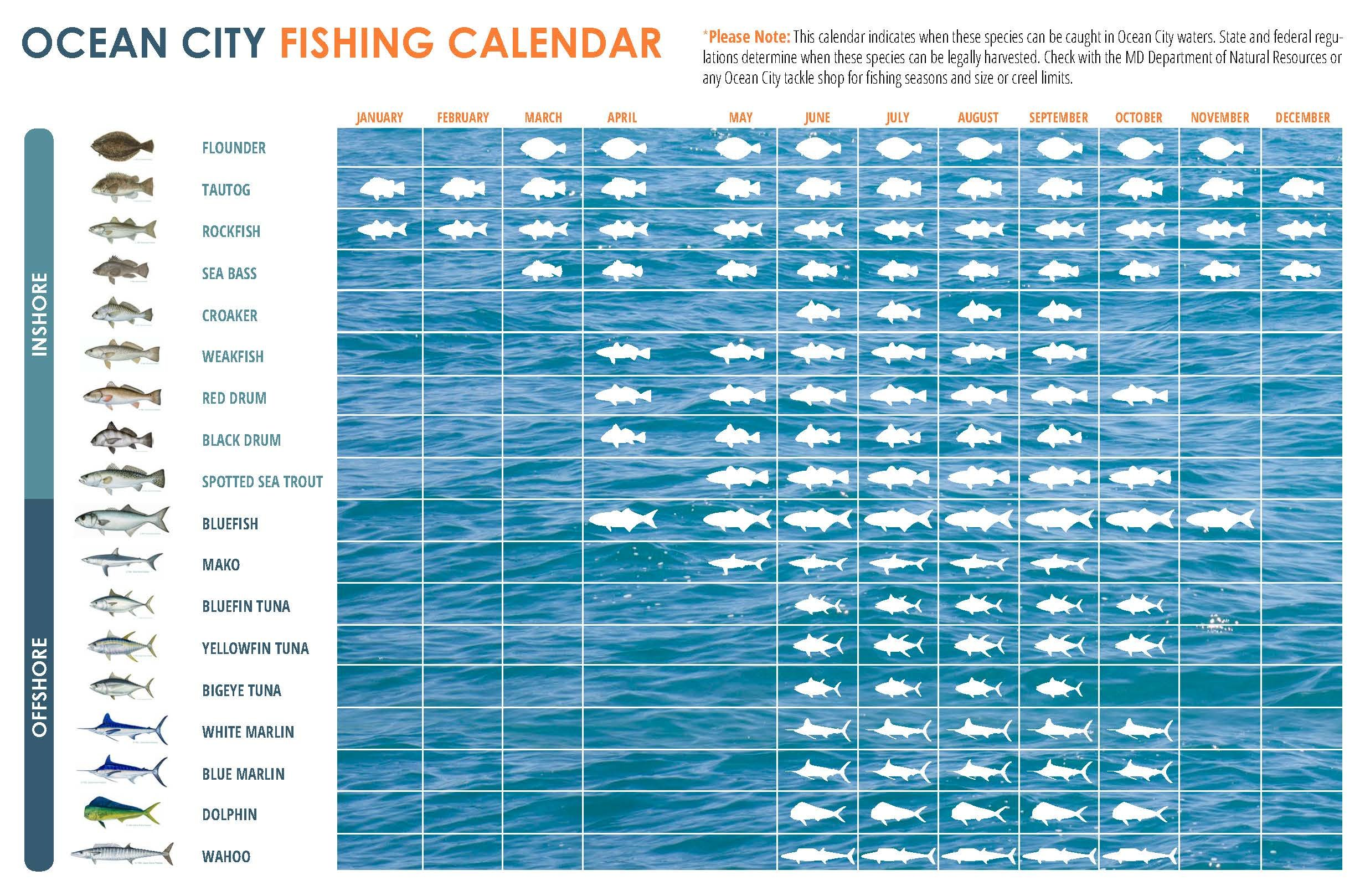 What fish to catch when to catch them in ocean city md click to enlarge nvjuhfo Images