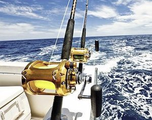 About fish in oc fishing reports news white marlin for Fishing spots in maryland
