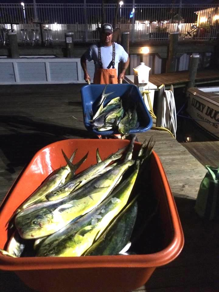 Tuna Are Getting Tough To Come By, But There Are Plenty of Mahi