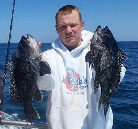 Maryland 2016 black sea bass regulations ocean city md for Bass fishing in maryland