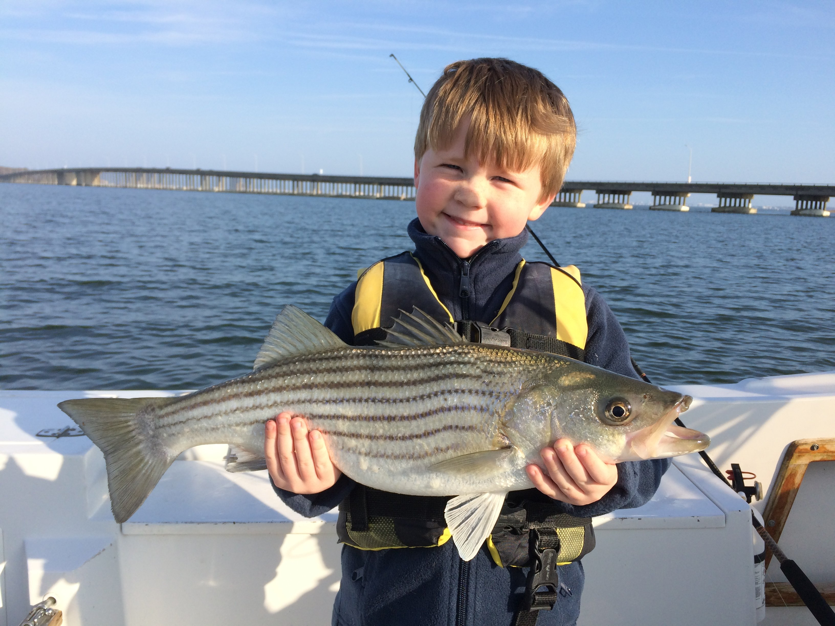 Route 90 rockfish ocean city md fishing for Md fishing license