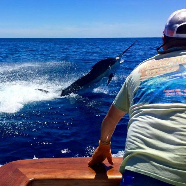 First Blue Marlin of the Season and Epic Tuna Fishing