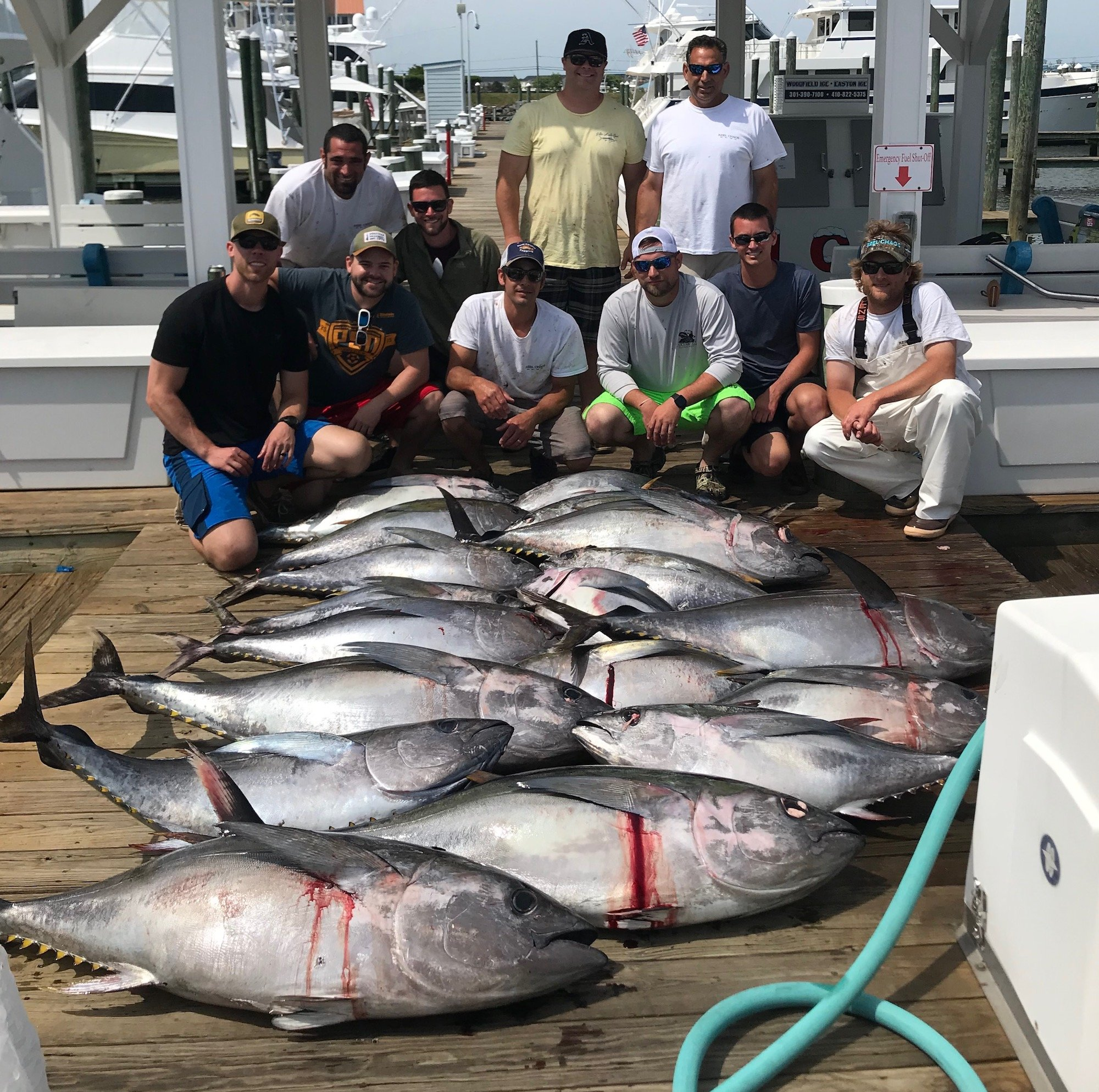 Tuna Fishing Is On Fire