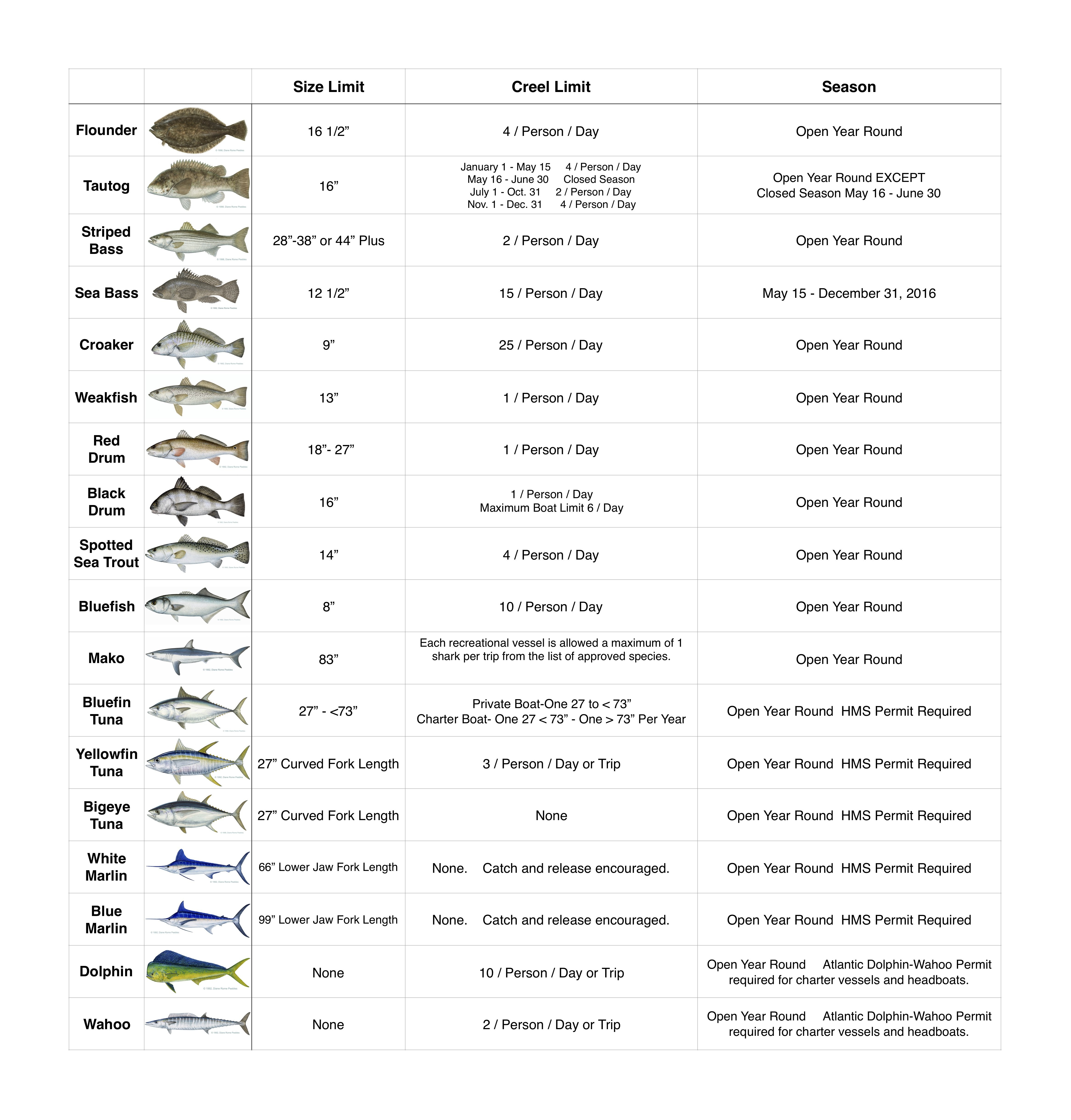 Read All Fishing Rules And Regulations In The State Of Maryland-8657
